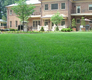 Lawn Maintenance in Herndon