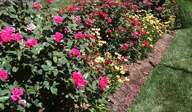 Planting in Falls Church, Virginia