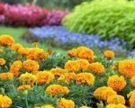 Creating Seasonal Color for Northern Virginia Landscapes