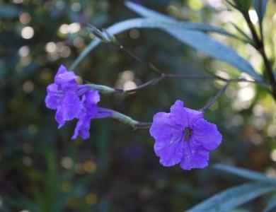 Flower in garden.