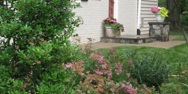 Plants in garden, McLean.