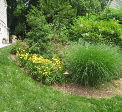 Trees and Shrubs in North Arlington, Virginia