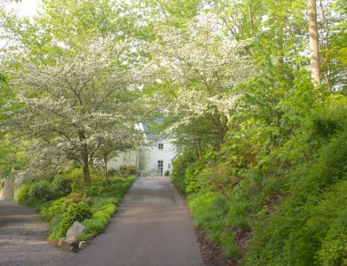 Tree lined driveway in McLean Virginia