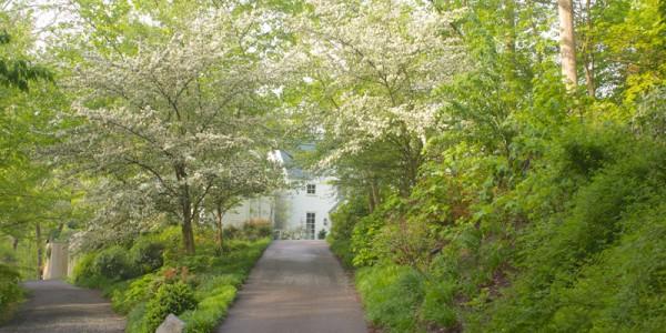 Tree lined driveway in McLean Virginia