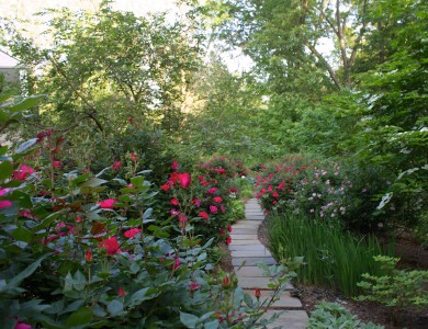 Garden flagstone path in McLean Virginia