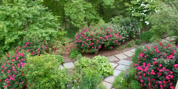 Landscape Plant design and stone path in McLean Virginia