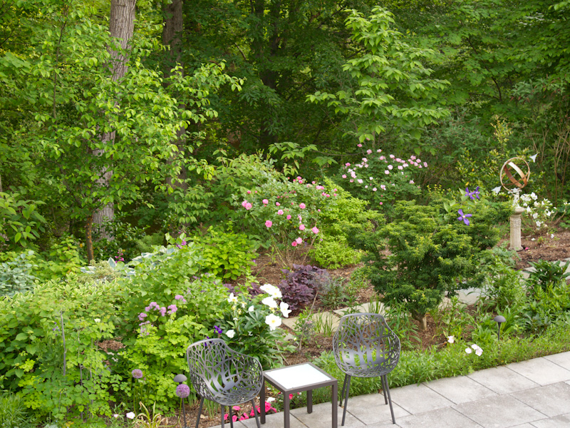 Photos of plants in northern virginia plant gallery for Landscape design northern virginia