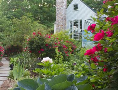 Landscape plants in McLean Virginia