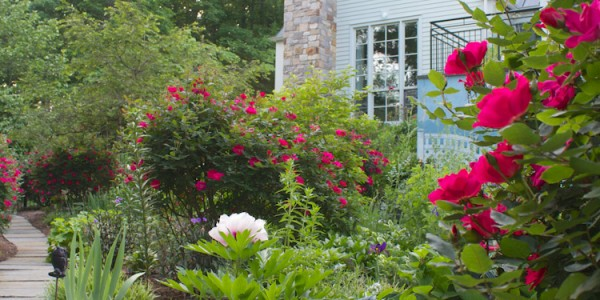 Landscape plants in McLean Virginia