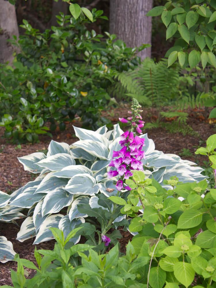 mclean-plantings