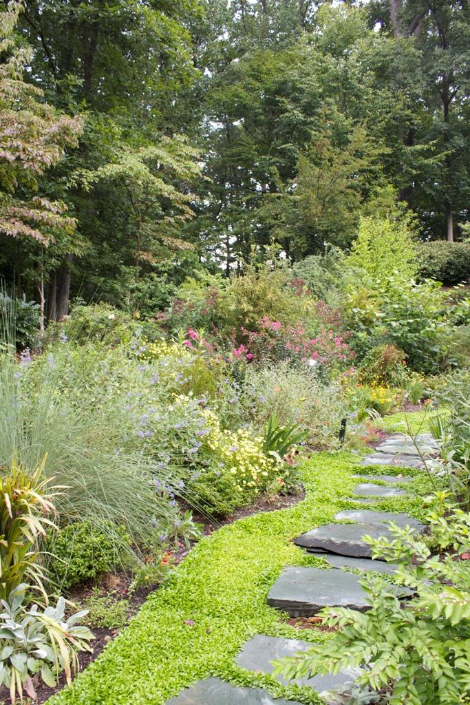 northern-virginia-landscape-plants