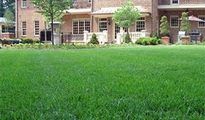 Lawn Maintenance in North Arlington, Virginia