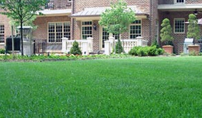Aeration and Overseeding in North Arlington, Virginia