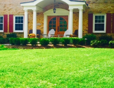 Lawn Renovation and Plant Installation in McLean, VA