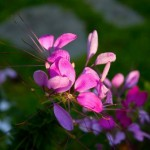 Spring Garden Care Tips in Northern Virginia