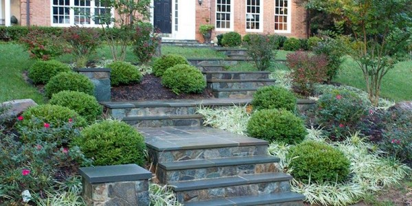 Front Yard Landscape and Sidewalk Design in Vienna, VA