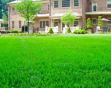 Benefits of a Fall Lawn Renovation