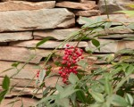 Top 5 Things to Make Your Landscape Fit for Spring in Northern VA