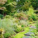 Plant Selection Tips for a Healthy Lawn