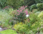 Landscaping with Native Plants in Northern Virginia